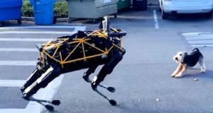 Robot Dog Plays with Real Dog